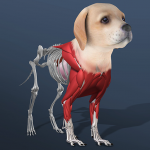 Idle Pet – Create cell by cell 4.9 APK