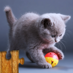 Cats Jigsaw Puzzles Games – For Kids & Adults 😺🧩 28.0 APK