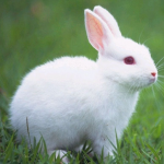 Talking Rabbit 1.1.5 APK