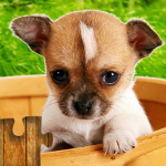 Dogs Jigsaw Puzzles Game – For Kids & Adults 🐶 28.3 APK