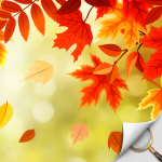 Hidden Object – Autumn Garden 1.1.78b APK