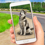 Collect Pocket Dogs 1.1 APK