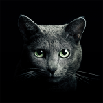 Find a Cat 5.9.1 APK