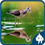 Reflection Jigsaw Puzzles 1.9.18 APK