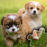 Dogs & Cats Puzzles for kids & toddlers 2 🐱🐩  APK
