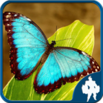 Butterfly Jigsaw Puzzles  APK 1.9.18