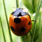 Insects Jigsaw Puzzles  APK 2.10.7